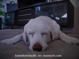 kemei2012-12-12-2.jpg