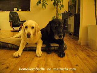 kemekero2012-12-1.jpg
