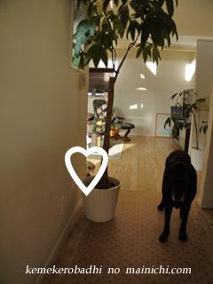 kemel2012-11-23.jpg