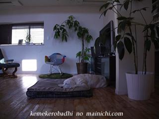kemel2012-12-12.jpg