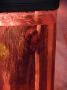 タニシ飼い始めました。 :エクステリア横浜(神奈川県・東京都の外構工事専門店)