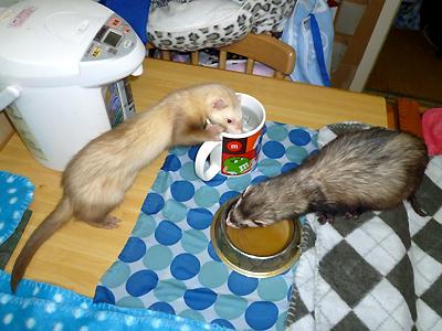 『いっしょに食べたいなぁ・・・』『ウマウマ~♪』