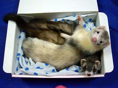 『ども~!』『この箱、好きなんです!』