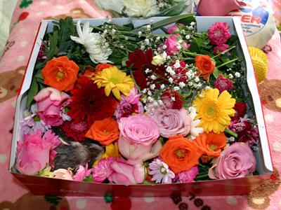 君は薔薇より美しい・・