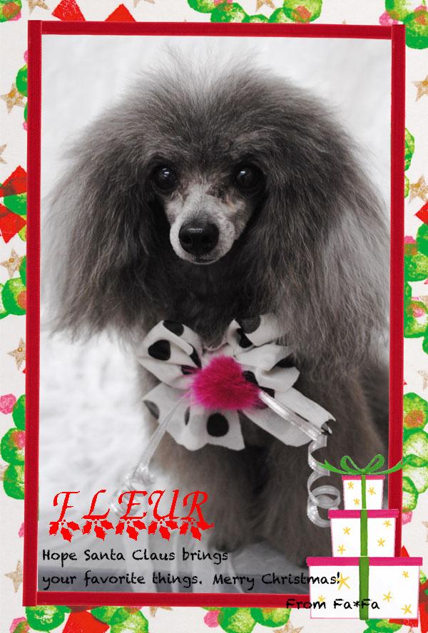 fleur_20121216183058.jpg