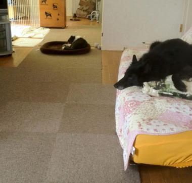 ベッド移動