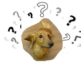 question_marks_icon.jpg