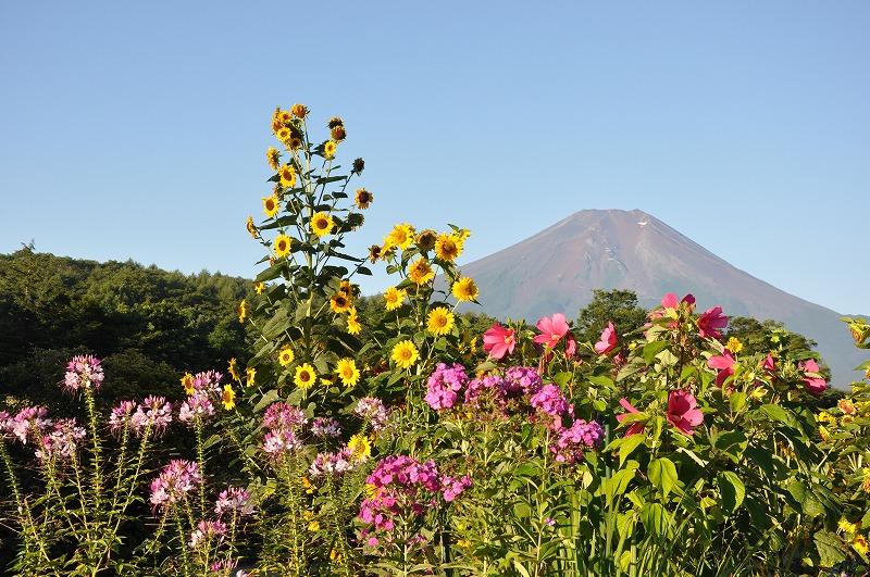 忍野村からの富士忍野村からの富士