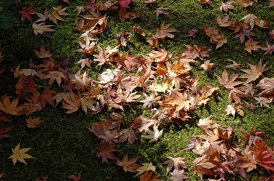 嵯峨野の秋1s嵯峨野の秋1嵯峨野の秋1