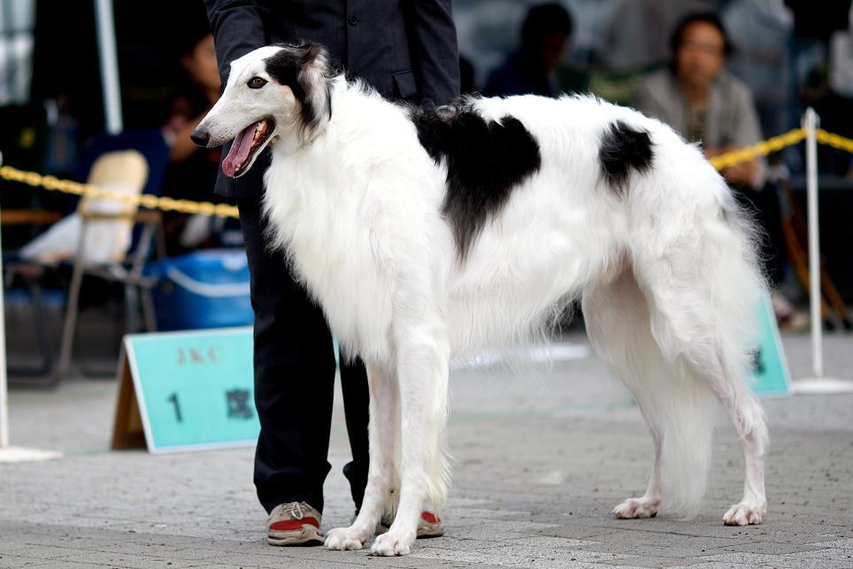 dogshow_1_2.jpg