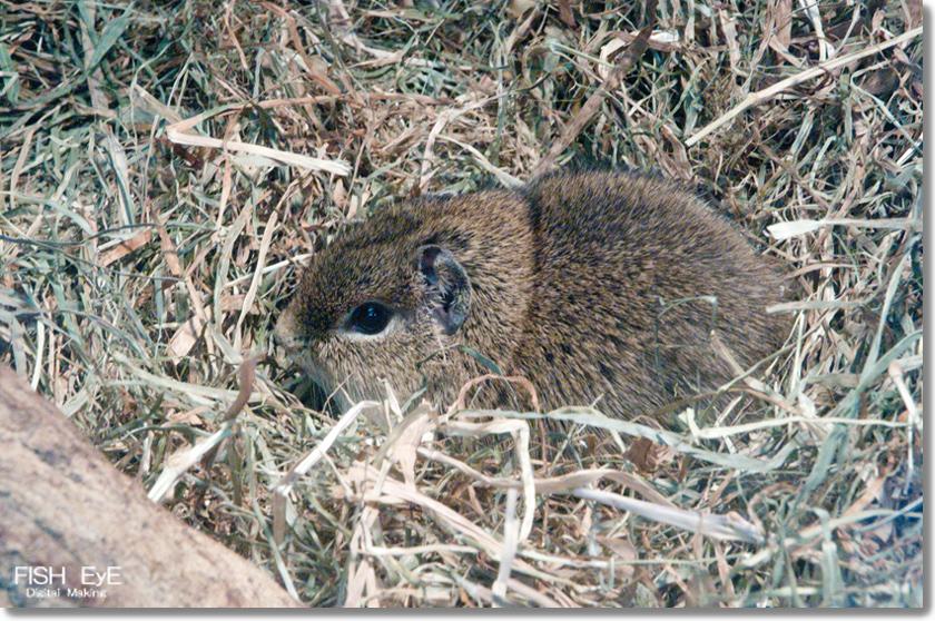 140207-kapibara8.jpg