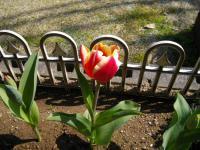 オカンの花0515