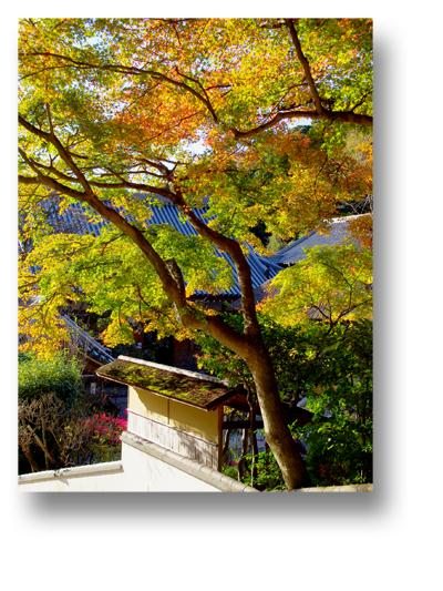 円覚寺141203_edited-1