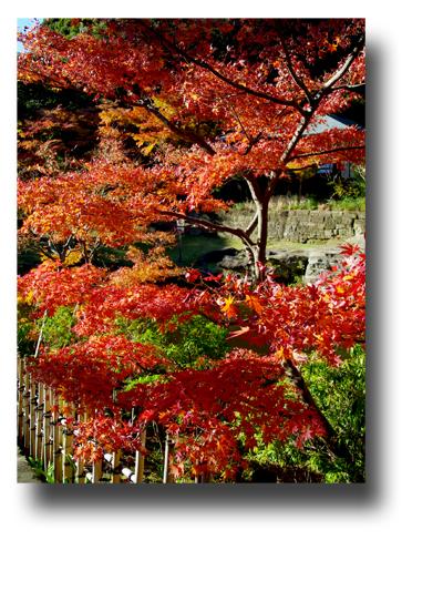 円覚寺141206_edited-1