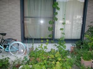 グリーンカーテン2012.7.5