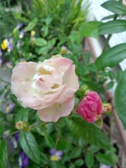 fc2blog_20120523142323b58.jpg
