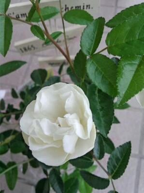 fc2blog_20120528201404698.jpg