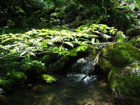 井原山 191