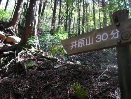 井原山 223
