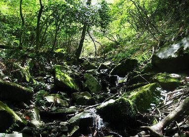 井原山 130