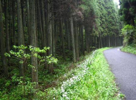 駒鳴峠 151