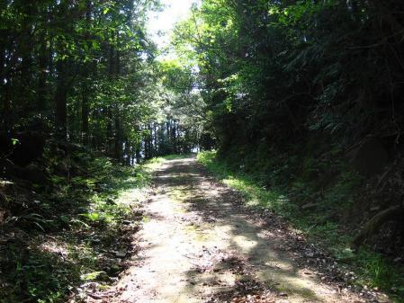 自然歩道 027