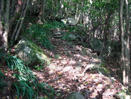 自然歩道 068