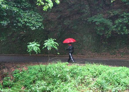 雨の清水山 007