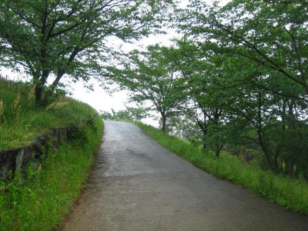 雨の清水山 069