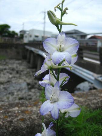 多良岳神社 034
