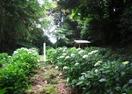 多良岳神社 136