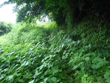 多良岳神社 128