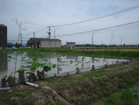 ぷくちゃん肥前山口 220