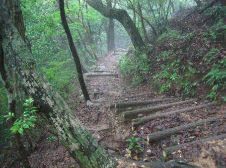 小岱山のトンボ 137