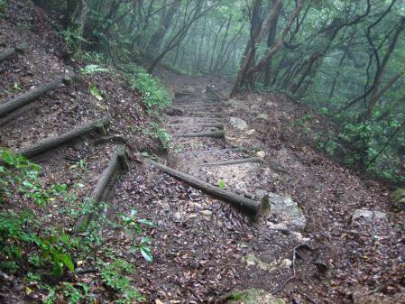 小岱山のトンボ 136