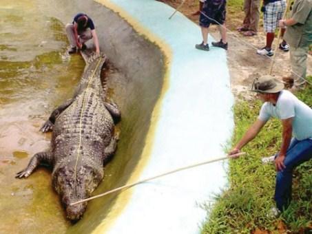 guinness-says-philippine-croc-world-s-largest-1341246259-8101.jpg