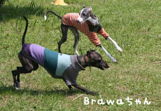 Brawaちゃん