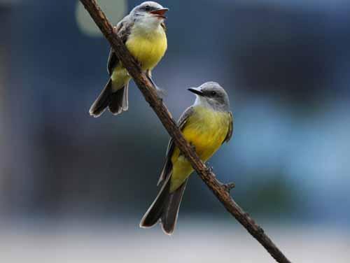 マチュピチュの鳥
