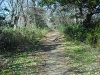 青葉の森2