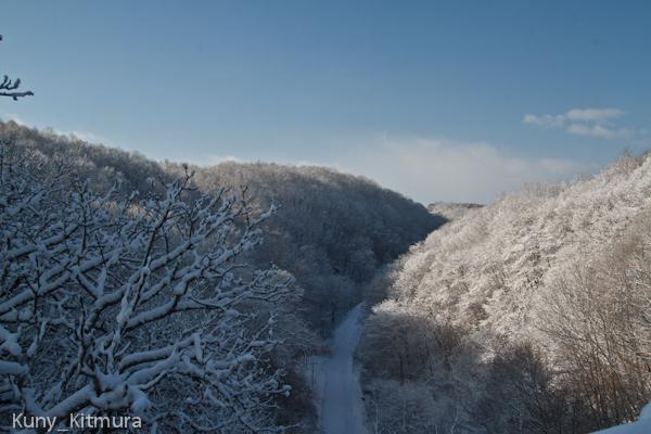 昨日降った雪が