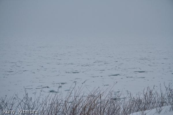 能取岬付近の流氷