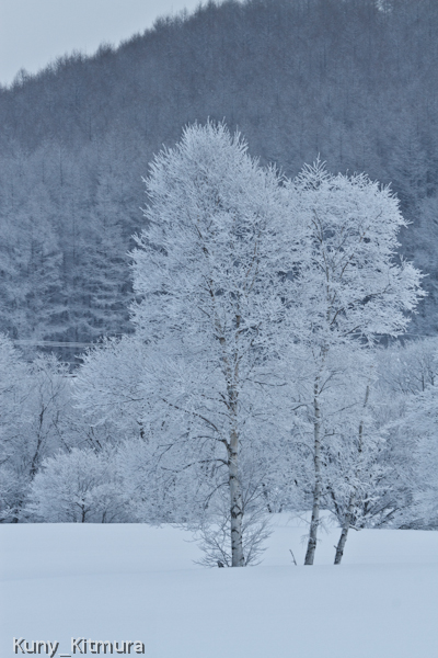 霧氷に雪が乗って