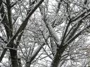 2013_-1_14 降雪
