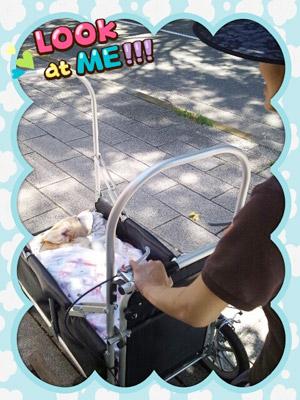 愛犬 |京都・滋賀リフォームするならフジ・ホーム