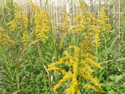 花粉アレルギー |京都・滋賀リフォームするならフジ・ホーム