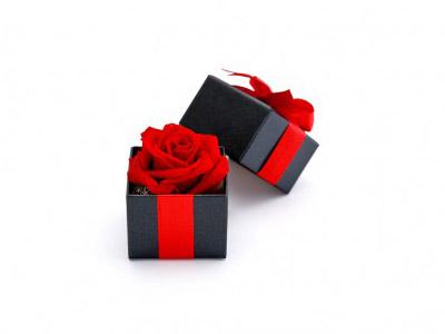 クリスマスプレゼント  京都・滋賀リフォームするならフジ・ホーム