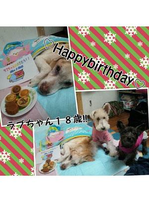 愛犬18歳の誕生日 |京都・滋賀リフォームするならフジ・ホーム