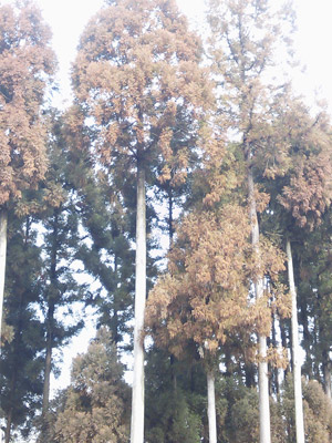 花粉症対策にヨーグルトR1 |京都・滋賀リフォームするならフジ・ホーム