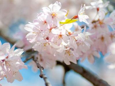 春のリフォーム施工事例 |京都・滋賀リフォームするならフジ・ホーム