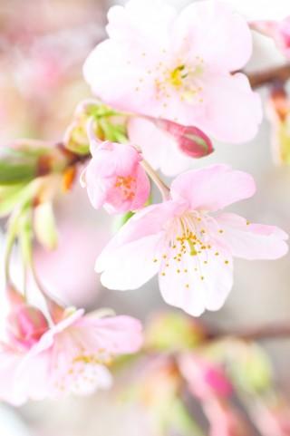 春一番 |京都・滋賀リフォームするならフジ・ホーム